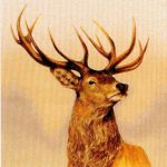 Chasse Stag No. 1