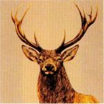 Chasse Stag No. 2